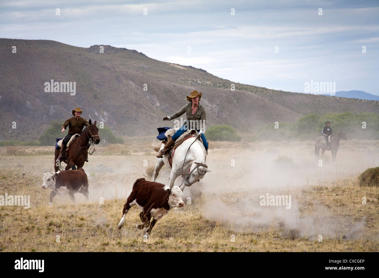Tourists and gouchos with cattle at the Huechahue Estancia, Patagonia, Argentina. - Stock Image