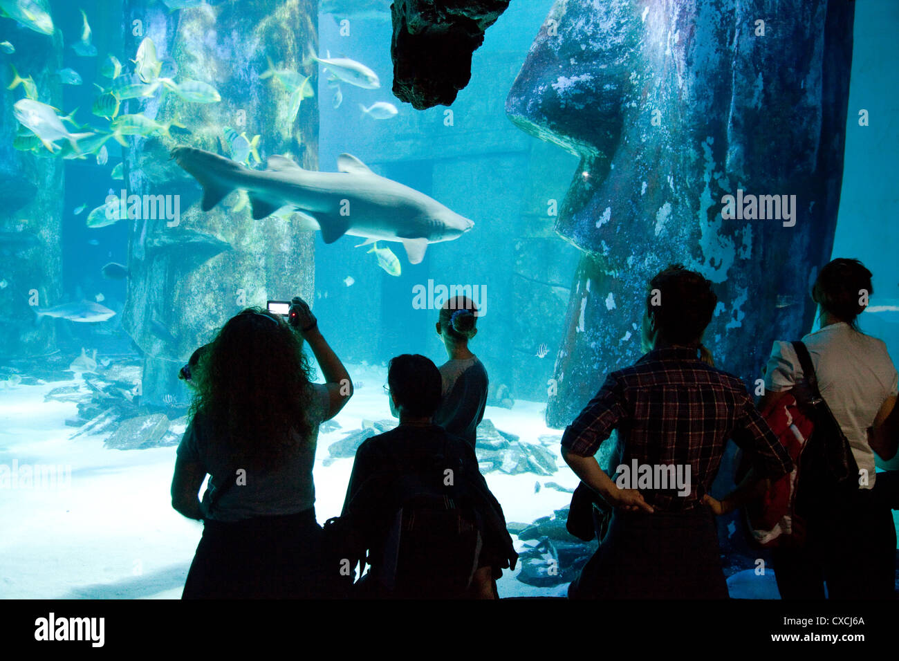 people looking at a shark, Sea Life London Aquarium, London UK - Stock Image