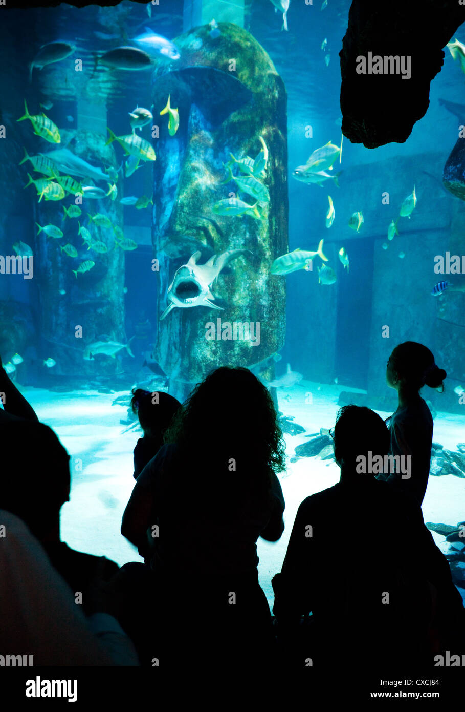 People looking at the fish in  the Sea Life London Aquarium, South bank, London UK - Stock Image