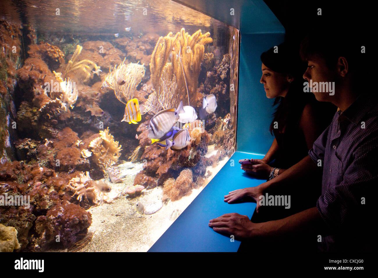 teenagers looking at fish, the Sea Life London Aquarium, London UK - Stock Image