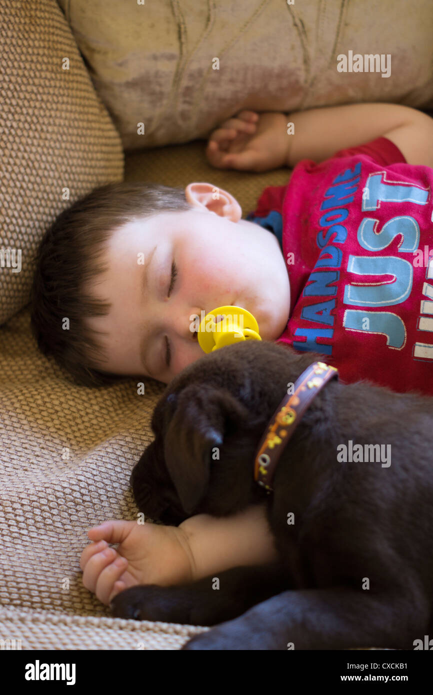 10 Week Old Chocolate Labrador Puppy Asleep With A 1 5 Year Old Baby Stock Photo Alamy