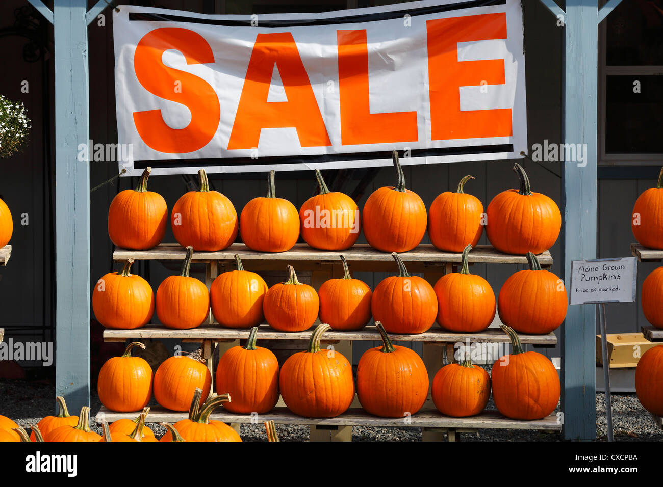 Roadside stand, pumpkins - Stock Image
