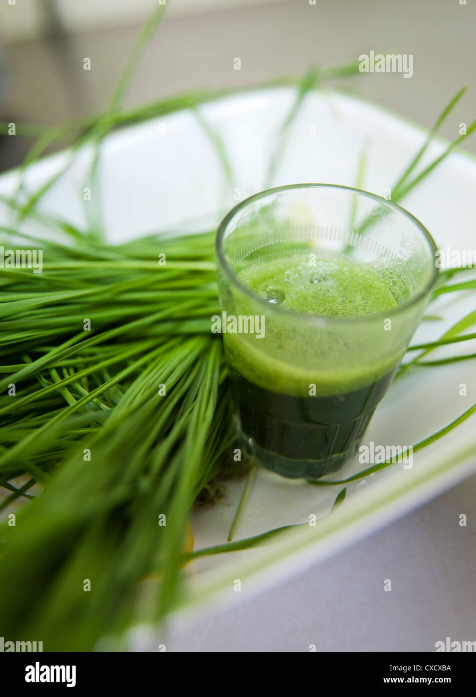 Wheat Grass sprouts and Wheatgrass drink  - Stock Image