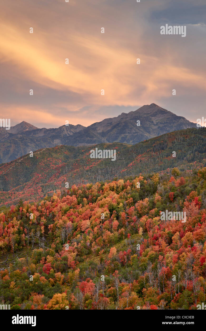 Orange clouds at sunset over orange and red maples in the fall, Uinta National Forest, Utah, United States of America - Stock Image