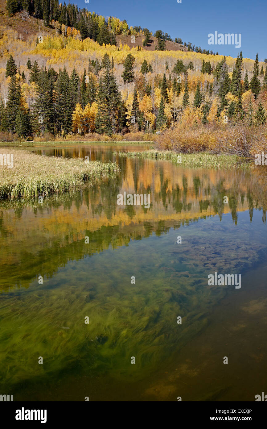 Silver Lake in the fall, Wasatch-Cache National Forest, Utah, United States of America, North America - Stock Image