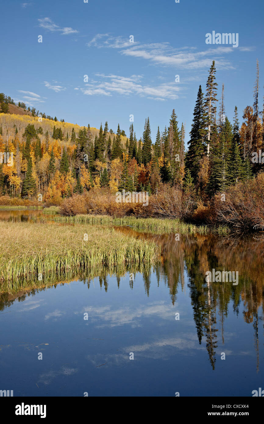Yellow and orange aspens reflected in Sliver Lake in the fall, Wasatch-Cache National Forest, Utah, United States - Stock Image