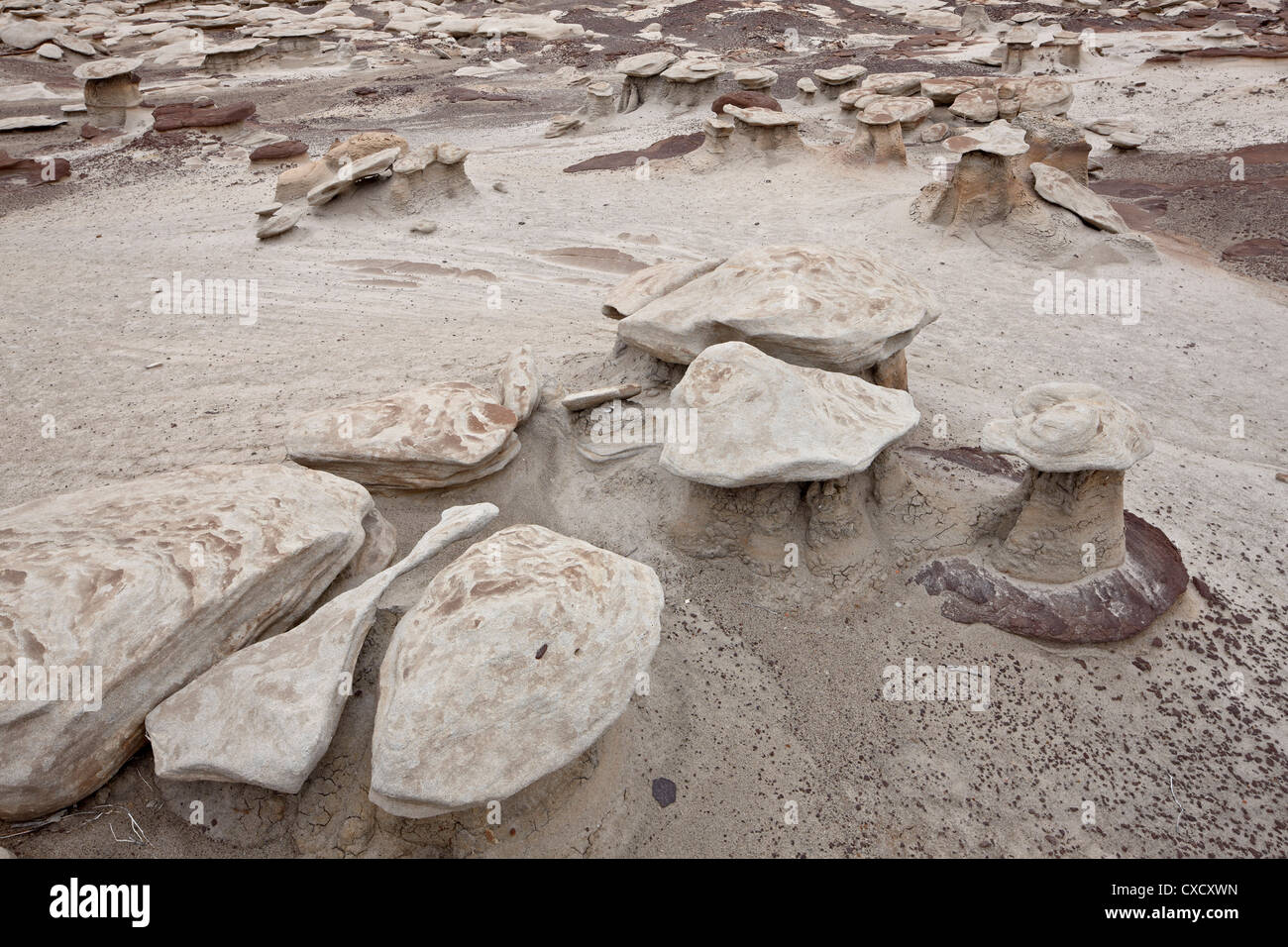 Small mushroom formations in the badlands, Bisti Wilderness, New Mexico, United States of America, North America - Stock Image