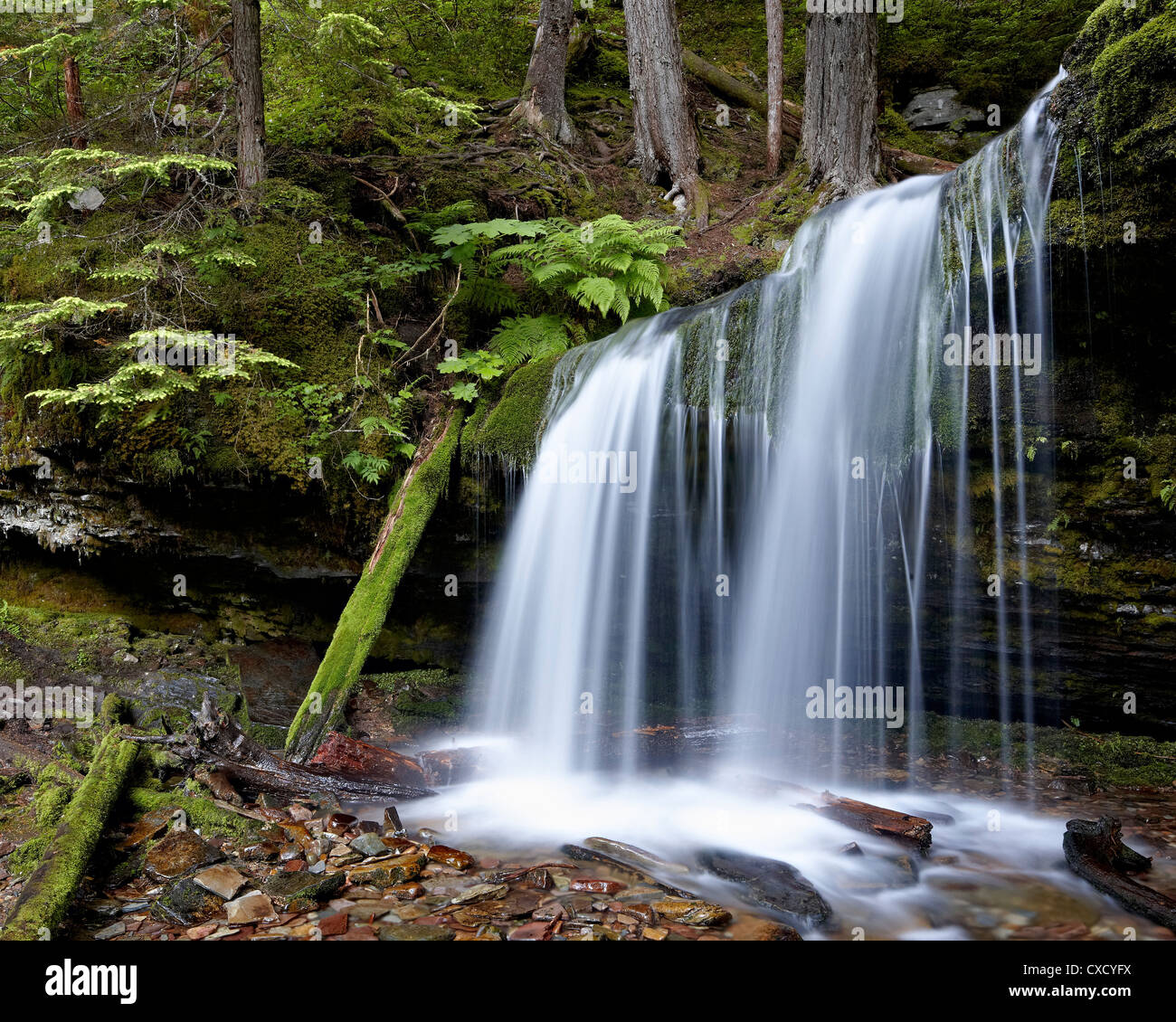 Fern Falls, Coeur d'Alene National Forest, Idaho Panhandle National Forests, Idaho, United States of America, - Stock Image