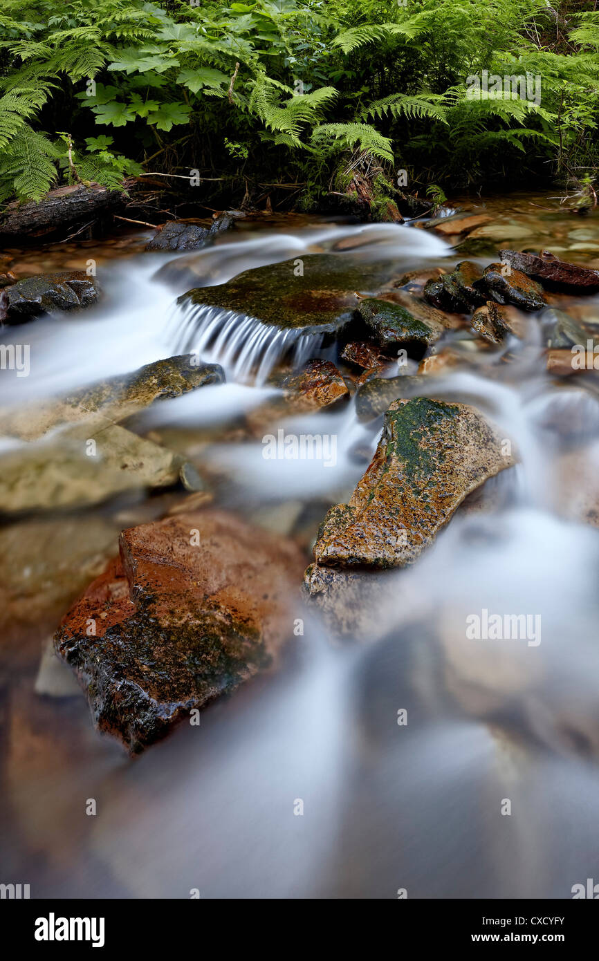 Cascades on Yellow Dog Creek, Coeur d'Alene National Forest, Idaho Panhandle National Forests, Idaho, United - Stock Image