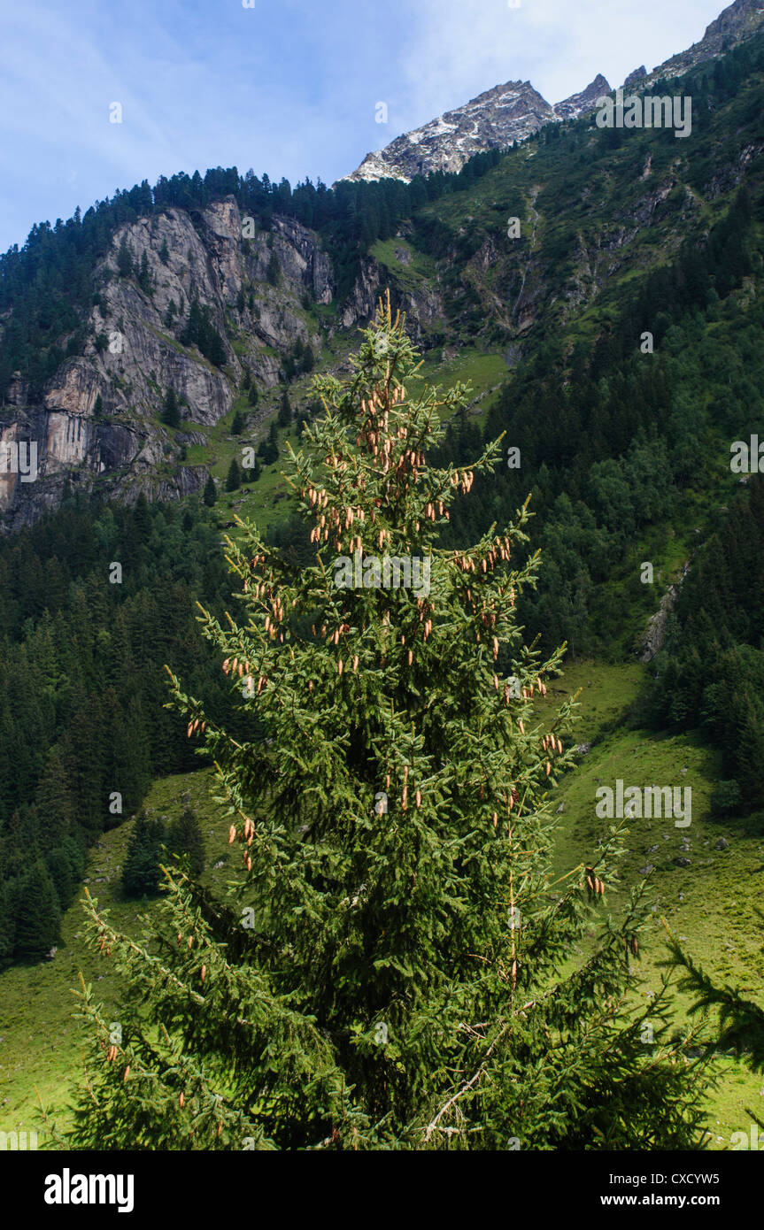 Austria, Zillertal High Alpine nature Park Hochgebirgs Naturpark near Ginzling, Tyrol Stock Photo