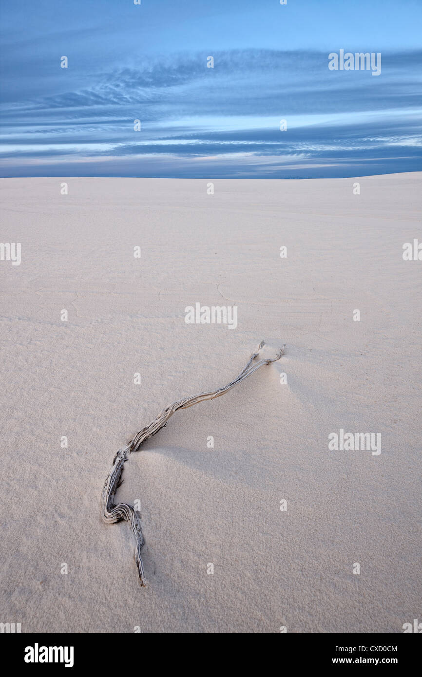 Weathered twig on a dune, White Sands National Monument, New Mexico, United States of America, North America - Stock Image
