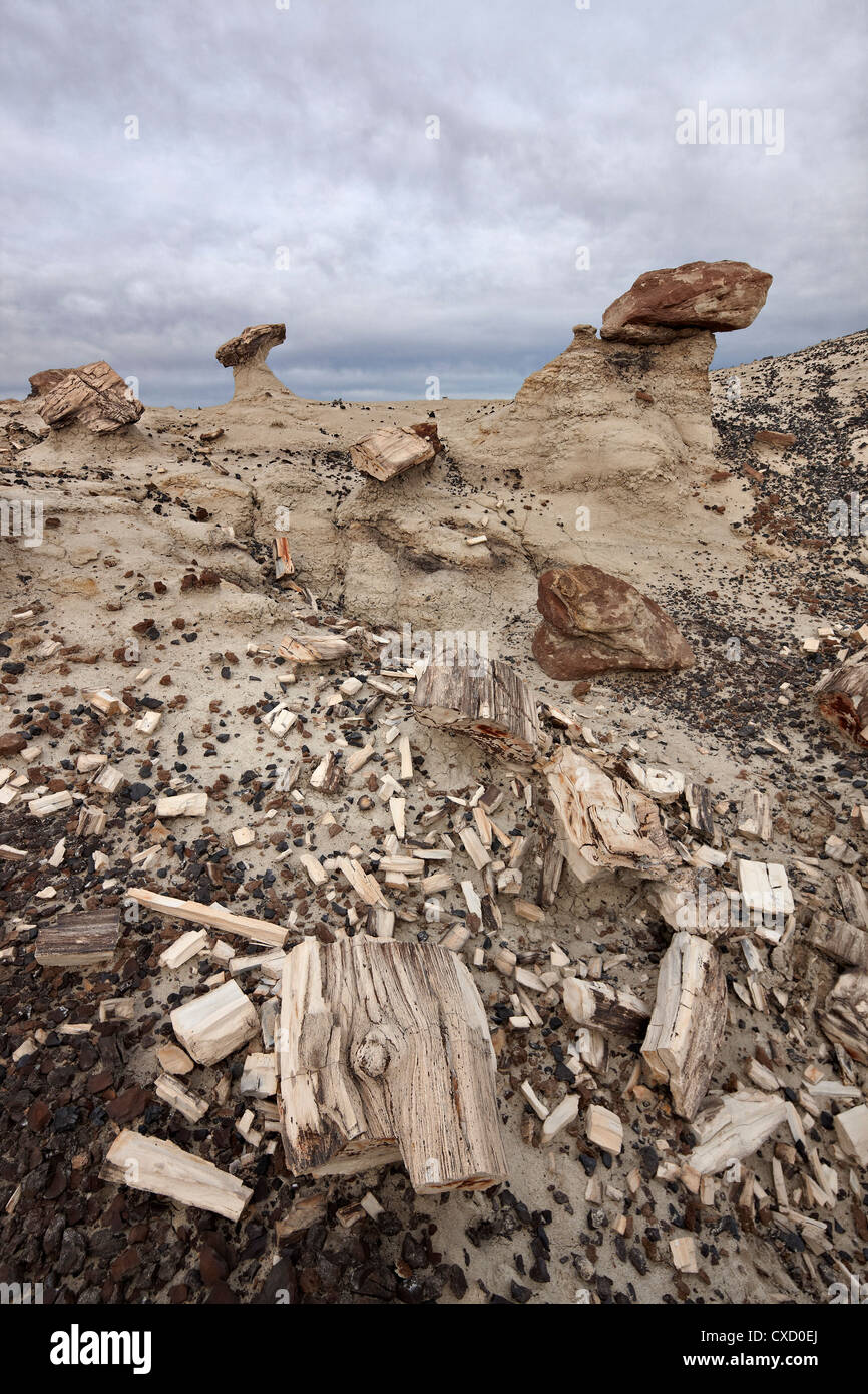 Petrified wood in the badlands on a cloudy day, San Juan Basin, New Mexico, United States of America, North America - Stock Image