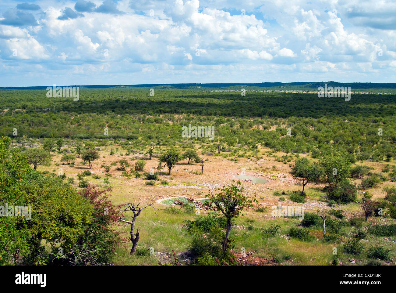 Ongava Game Reserve, Namibia, Africa - Stock Image