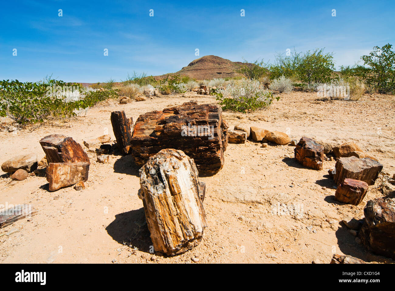 Petrified Forest, fossilised tree trunks, Damaraland, Kunene Region, Namibia, Africa - Stock Image