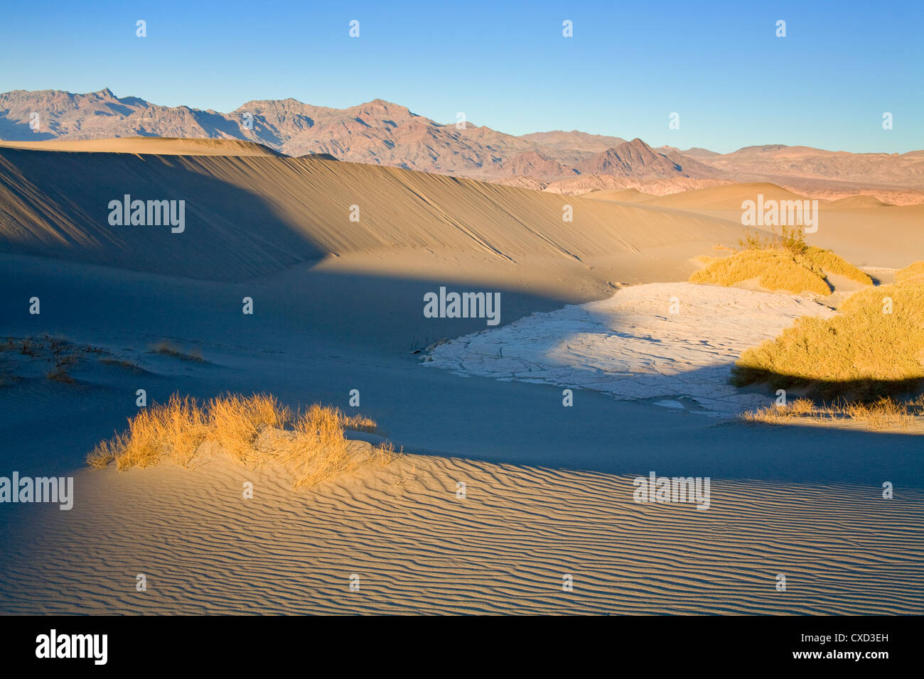 Mesquite Flat Sand Dunes, Death Valley National Park, California, United States of America, North America - Stock Image