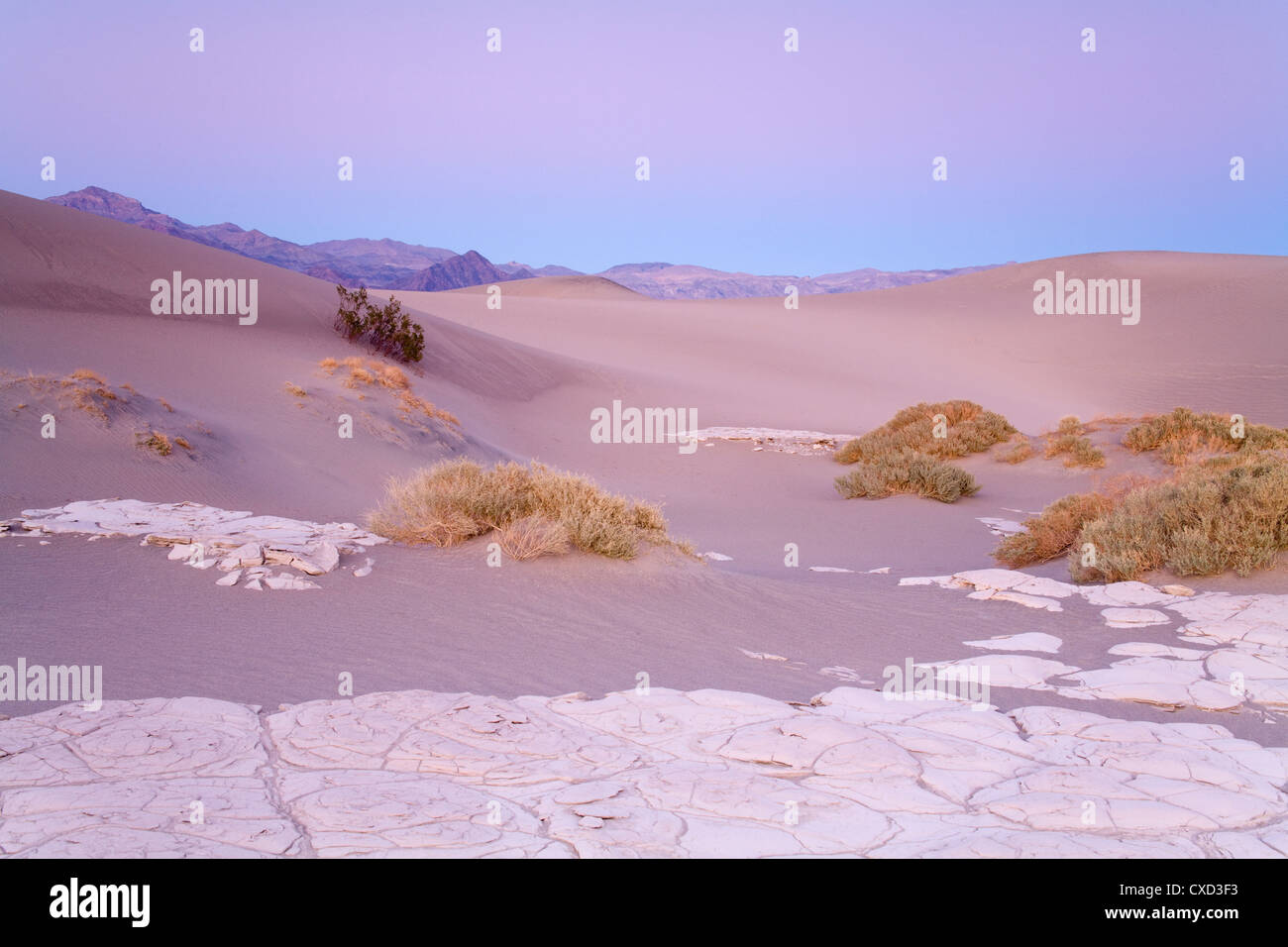 Dried mud in the Mesquite Flat Sand Dunes, Death Valley National Park, California, United States of America, North - Stock Image