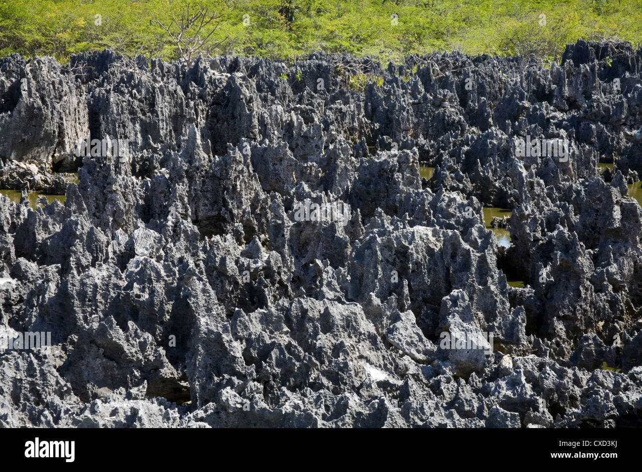 Rock Formations in Hell, Grand Cayman, Cayman Islands, Greater Antilles, West Indies, Caribbean, Central America - Stock Image