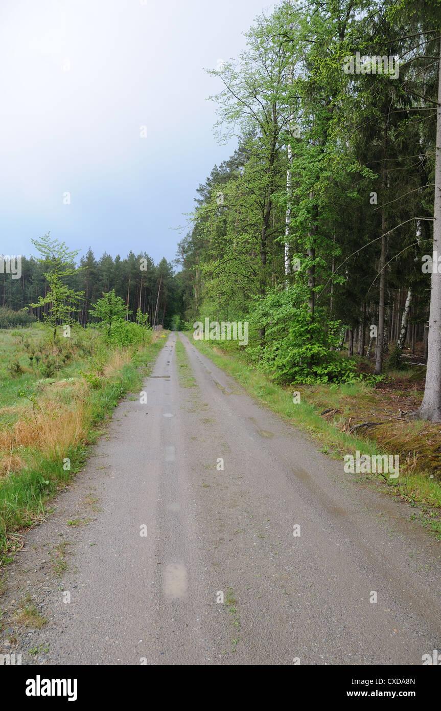 Unpaved road in forest near Kersko, Central Bohemia Region. - Stock Image