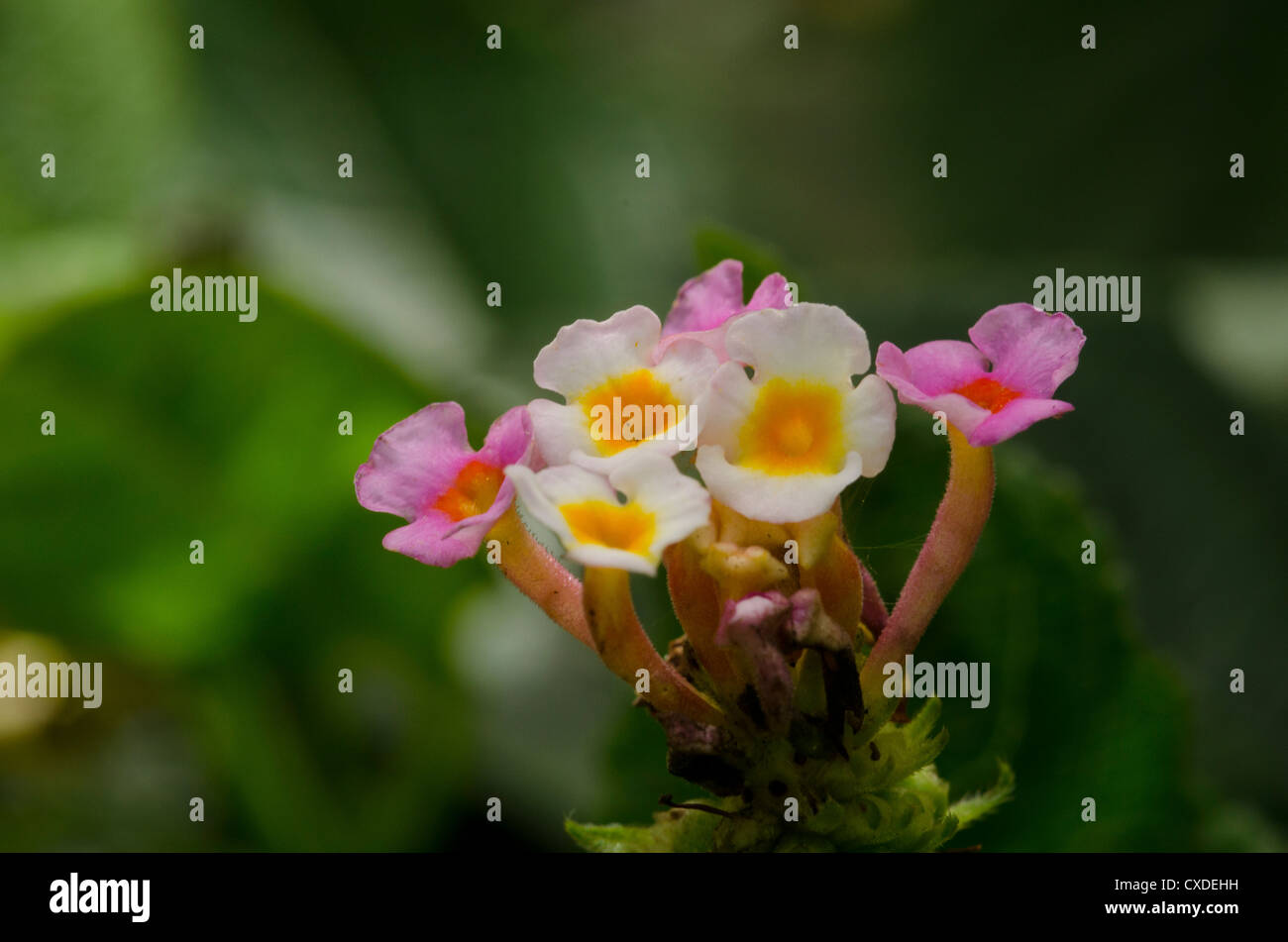 Tiny Pink And White Flowers Stock Photo 50698637 Alamy