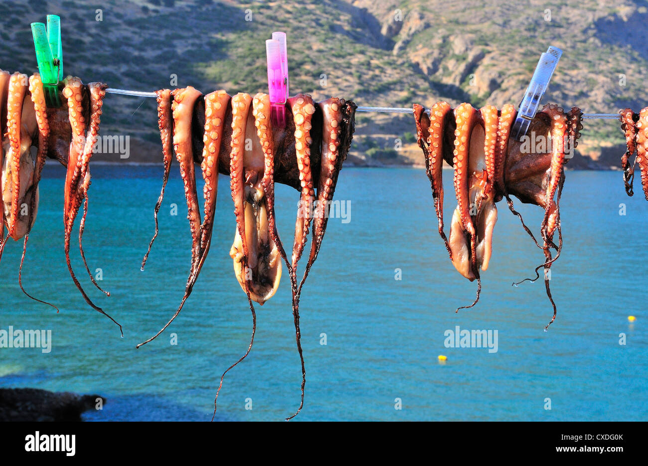 Freshly caught calamari or squid pegged out  on a line and drying in the sun outside a taverna in Plaka, near  Elounda, - Stock Image