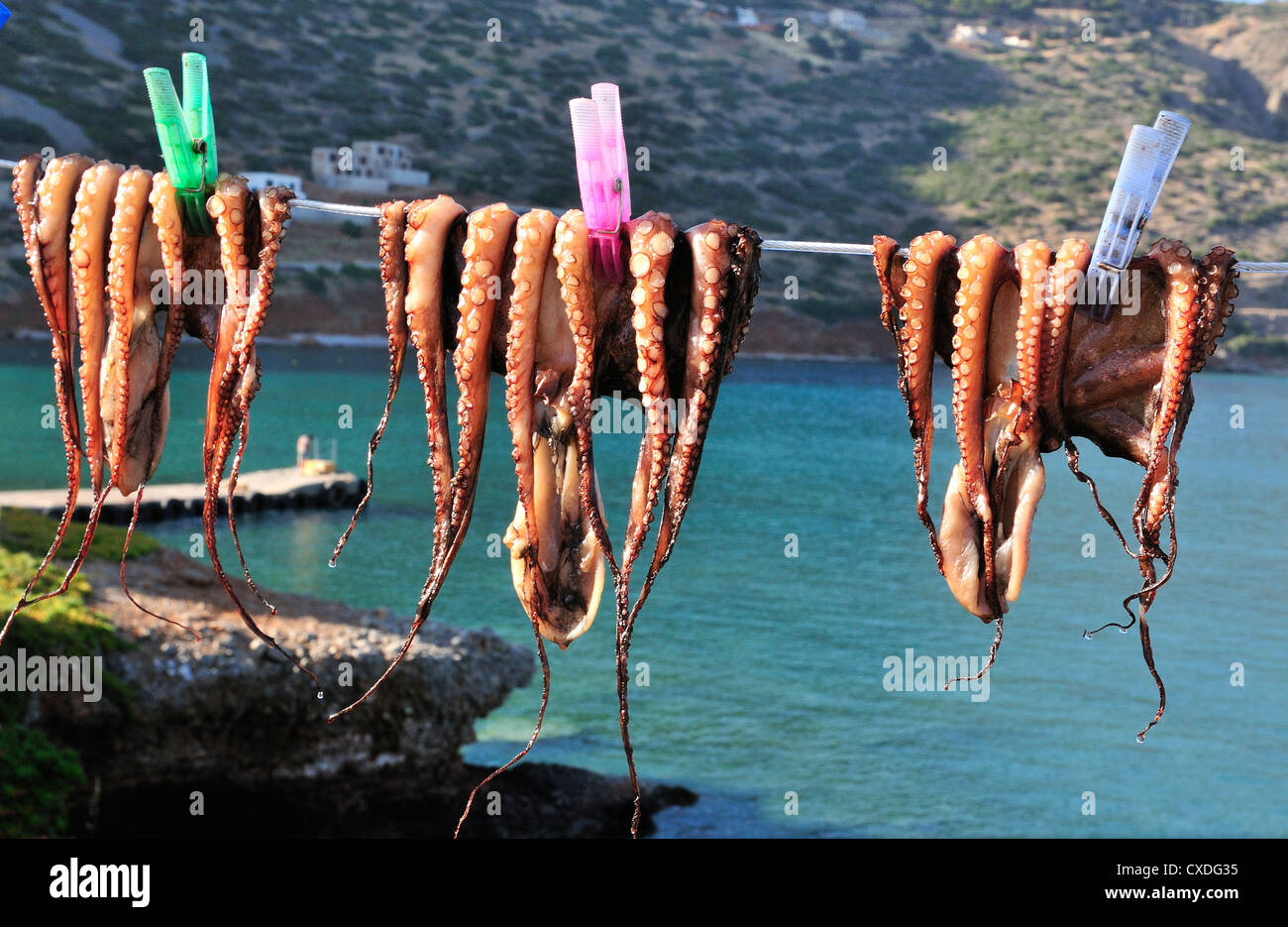 Freshly caught calamari or squid pegged out on a line and drying in the sun outside a taverna in Plaka, nr Elouda, - Stock Image