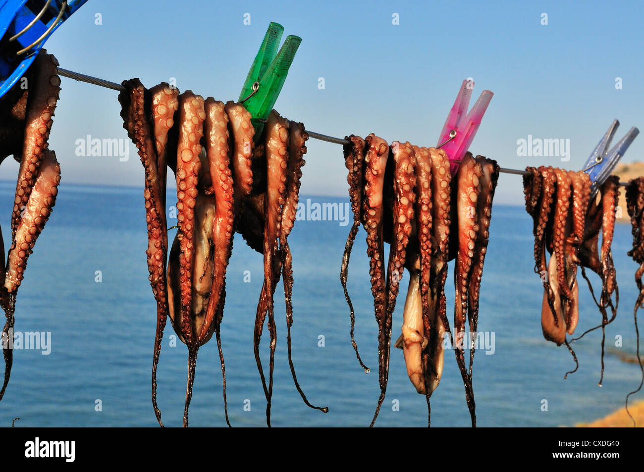 Freshly caught calamari or squid pegged out and drying in the sun on a line outside a taverna in Plaka, near Elouda, - Stock Image