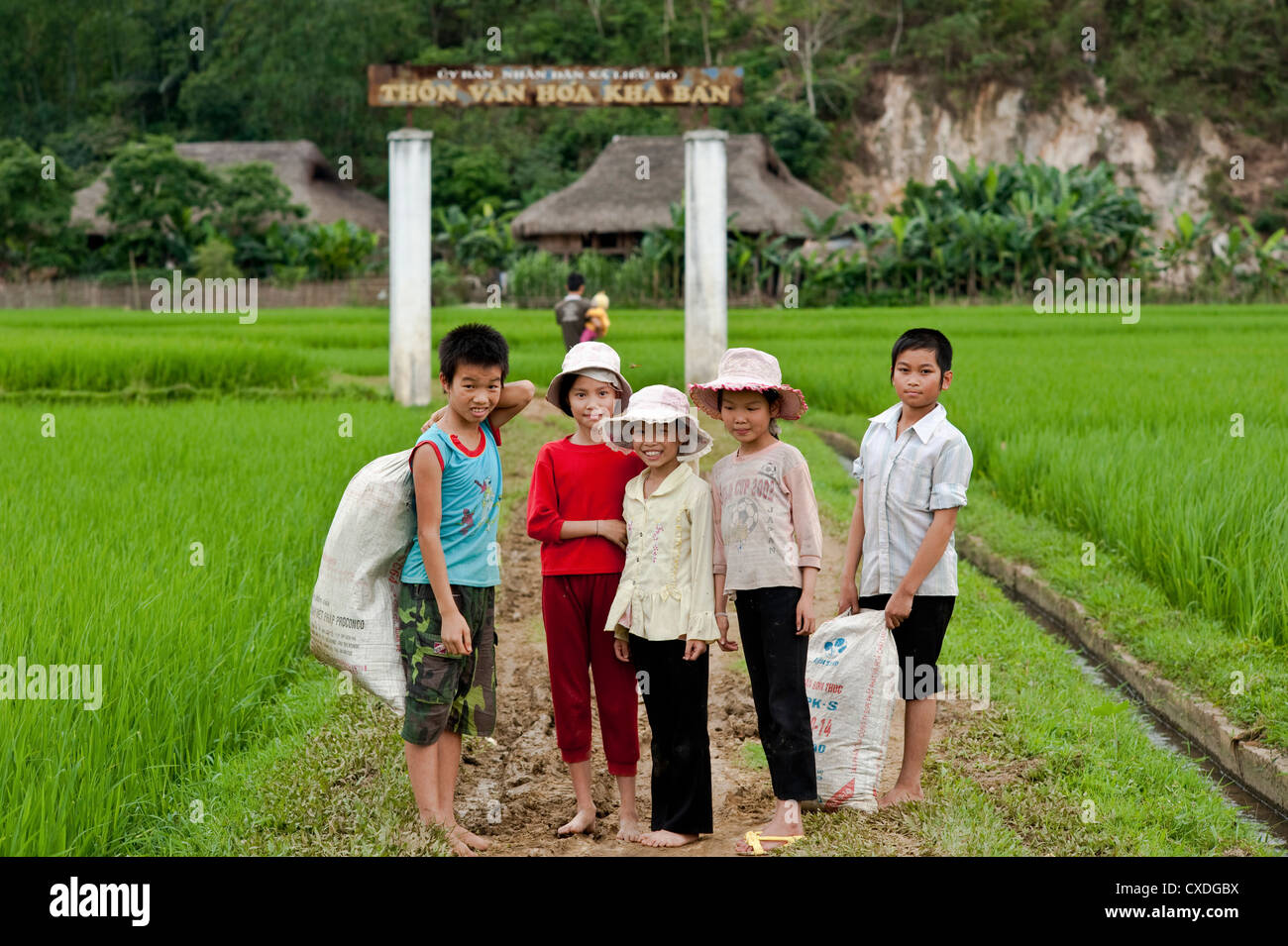 Group of children in a village in North Vietnam surrounded by rice paddy fields - Stock Image