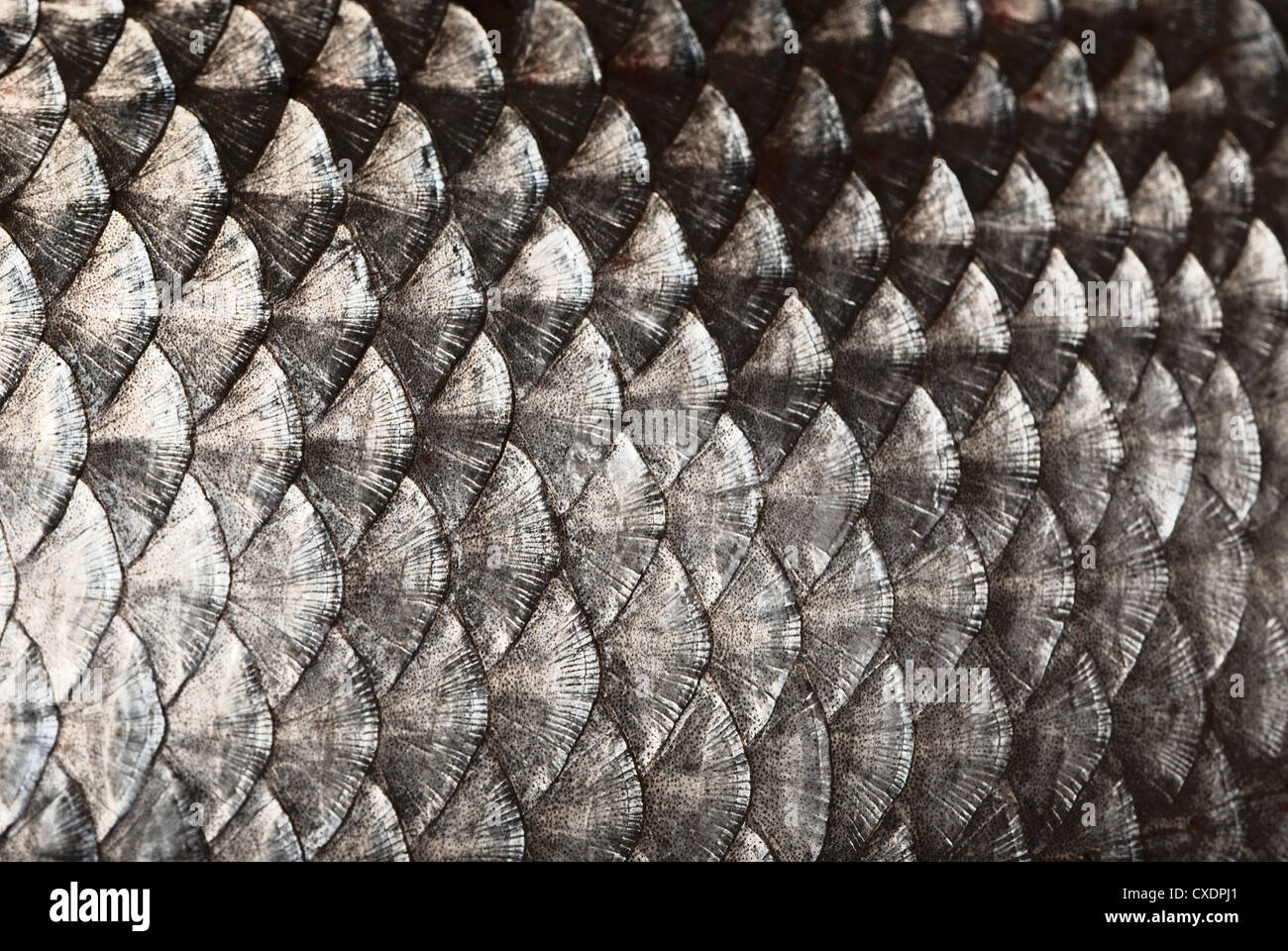 Fish scales background - Stock Image