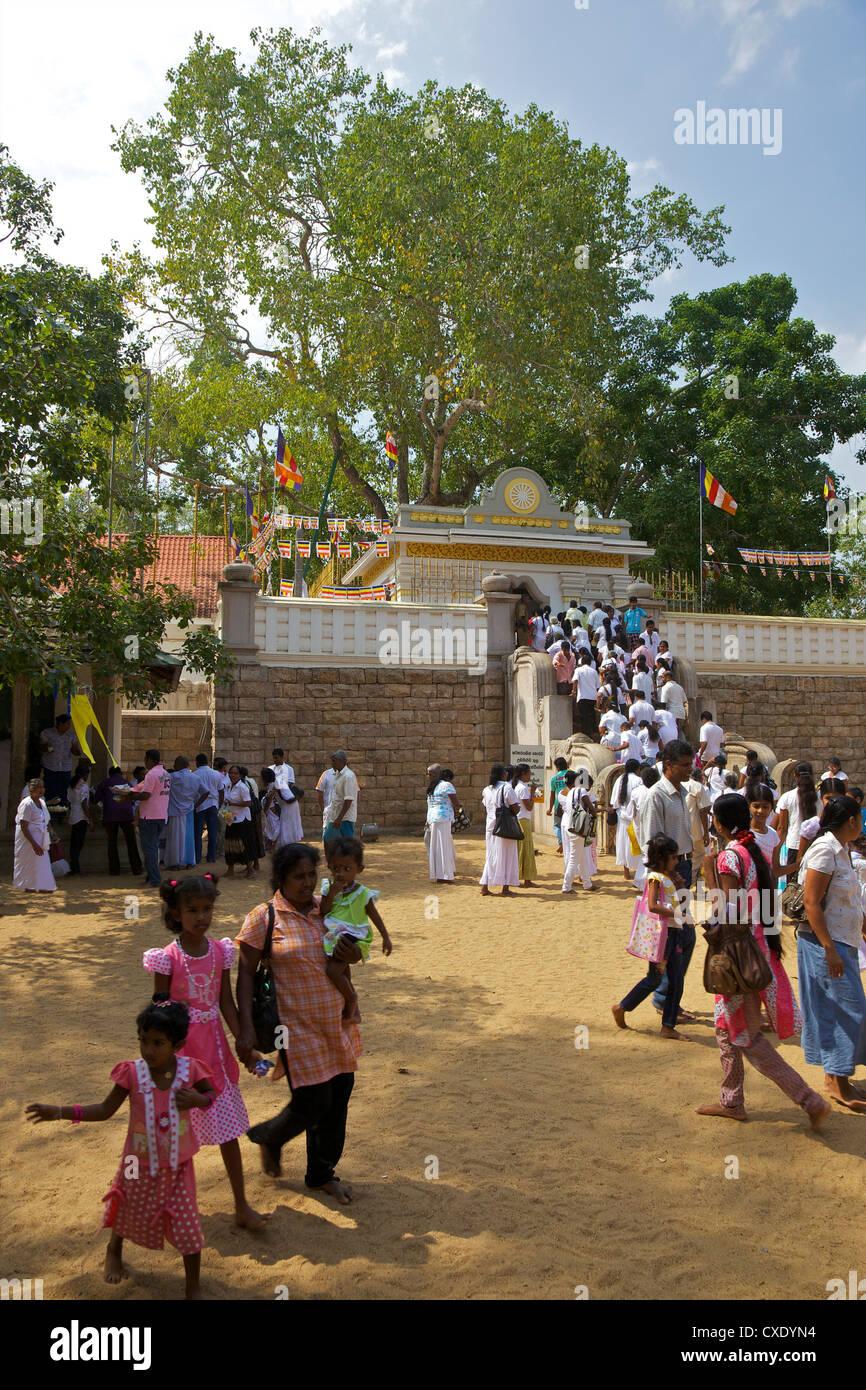 Buddhist pilgrims Sri Maha Bodhi, sacred bodhi tree planted in 249 BC, Unesco World Heritage Site, Anuradhapura, Stock Photo