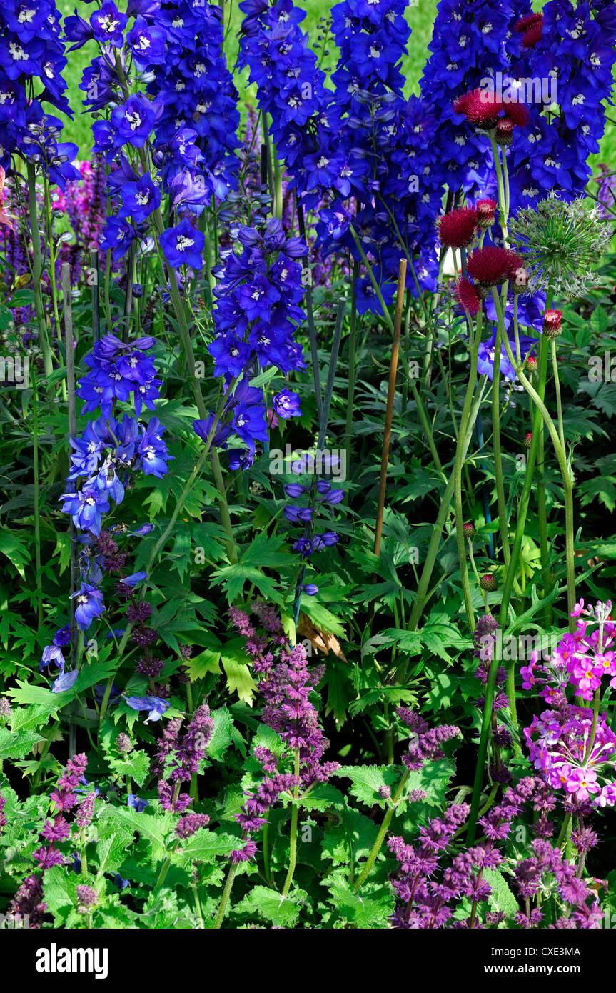 nepeta purple haze cirsium rivulare atropurpureum delphinium perennial border planting plant scheme combination - Stock Image