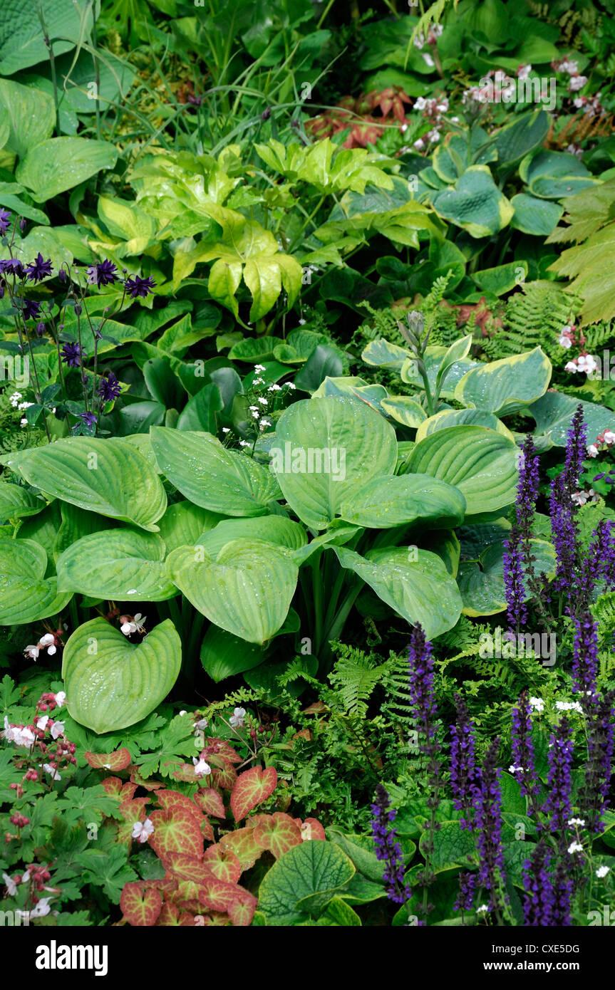 Shady Shade Shaded Planting Scheme Garden Gardening Design Hosta