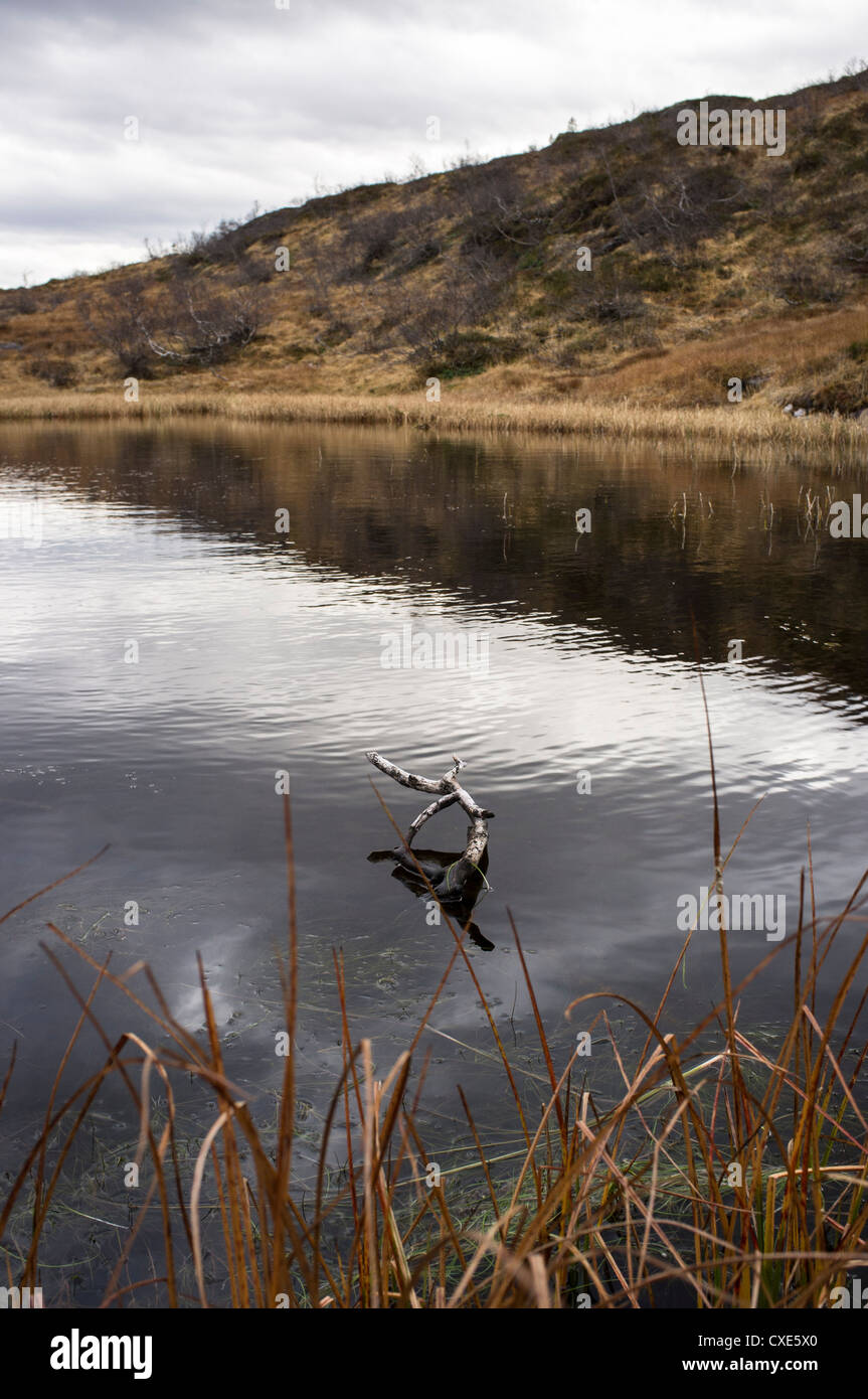 kvamskogen, sjö, vann, vatten, tjern, tjärn, höst, høst, gren, tyst, stille, ro, lugn, fjell, fjäll, natur, nature Stock Photo