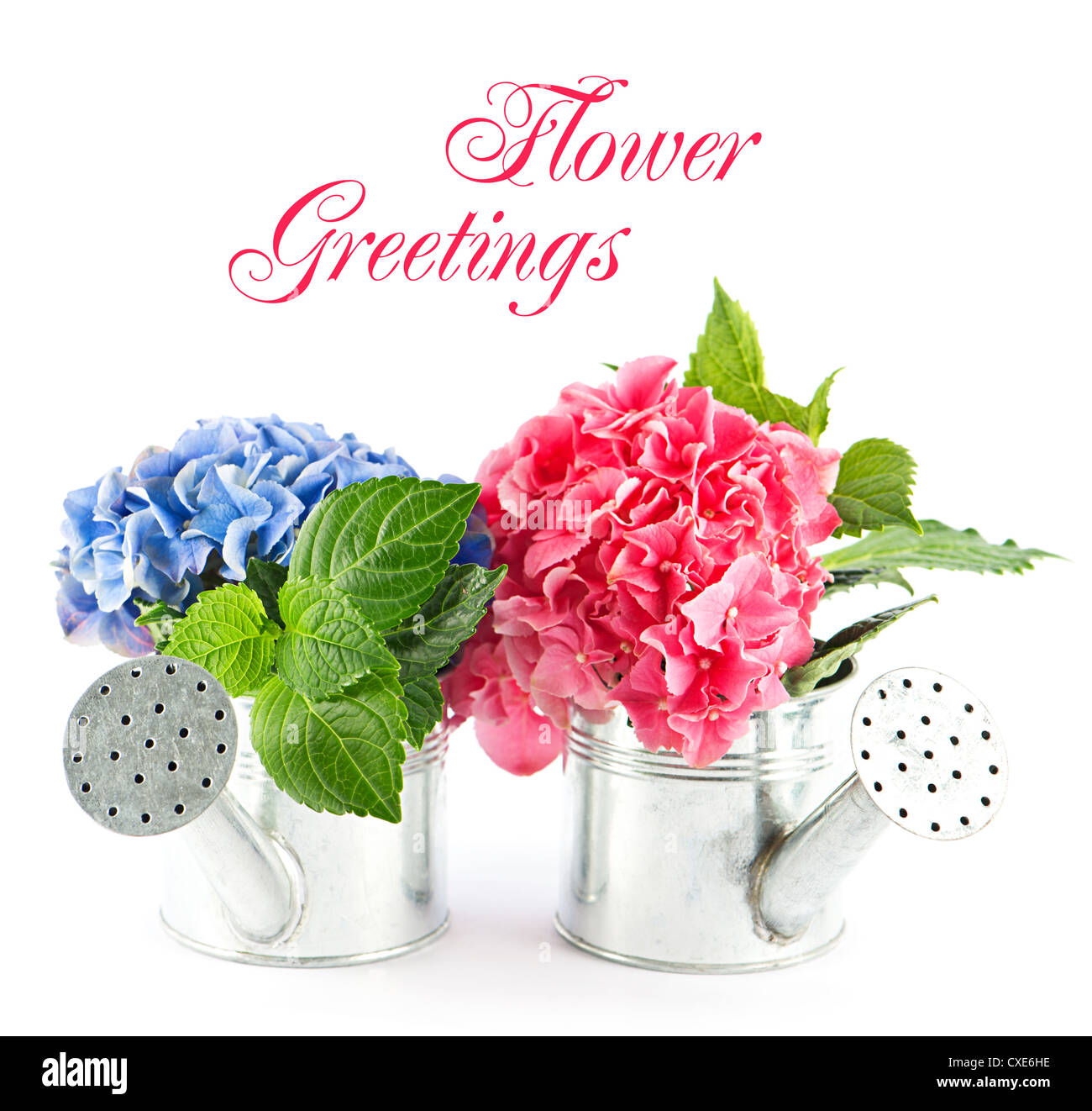 Flower Greetings Stock Photos Flower Greetings Stock Images Alamy