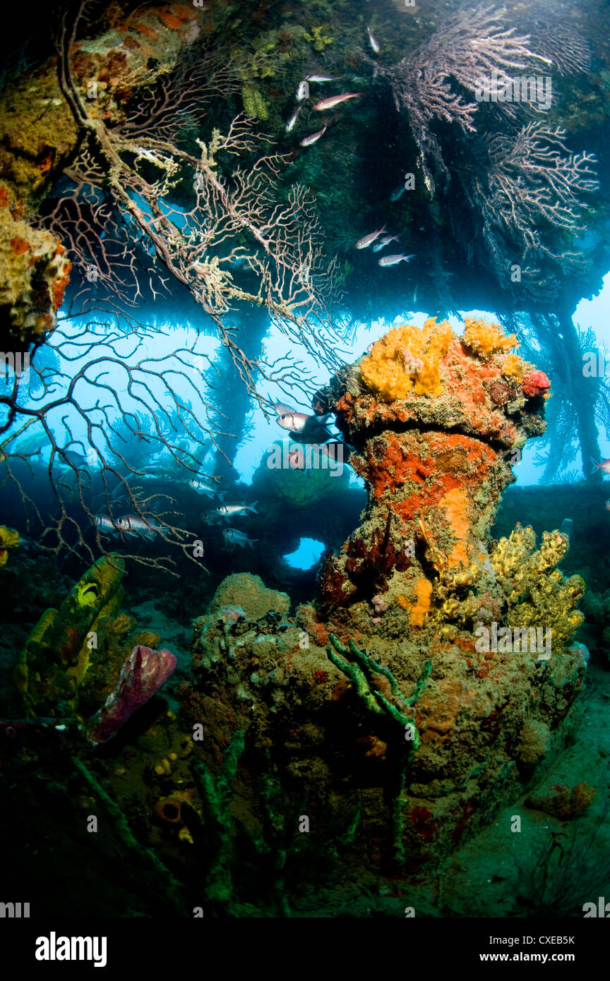 Coral growth inside the wreck of the Lesleen M freighter, sunk as an artificial reef in 1985 in Anse Cochon Bay, - Stock Image