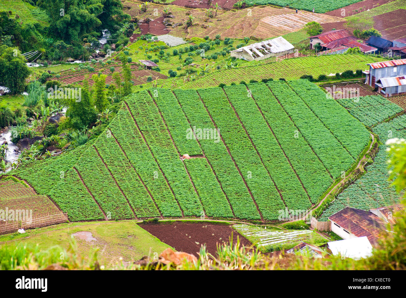 Aerial phot of vegetable fields at Wonosobo, Dieng Plateau, Central Java, Indonesia, Southeast Asia, Asia - Stock Image