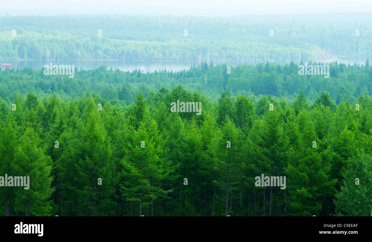 The thick forest the north temperate zone stock photo 50720391 alamy the thick forest the north temperate zone altavistaventures Image collections