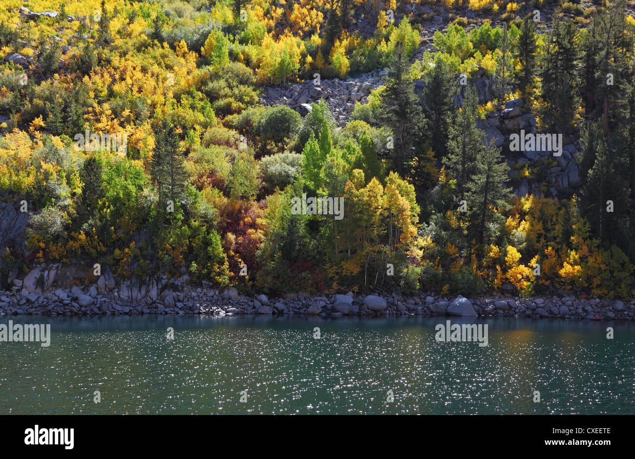 The yellow foliage shines  of midday sun - Stock Image