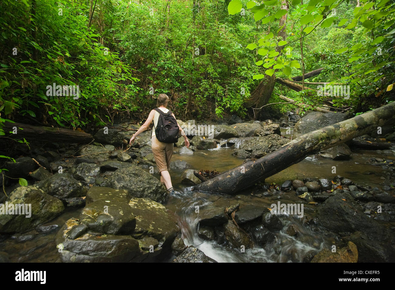 Marcy Summers in small stream, rainforest, Tanah Merah, Mt. Tompotika area, Central Sulawesi, Indonesia - Stock Image