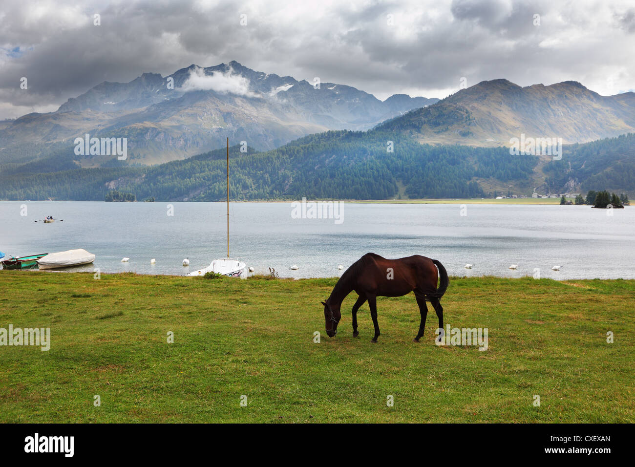The  bay horse near the moored yachts - Stock Image