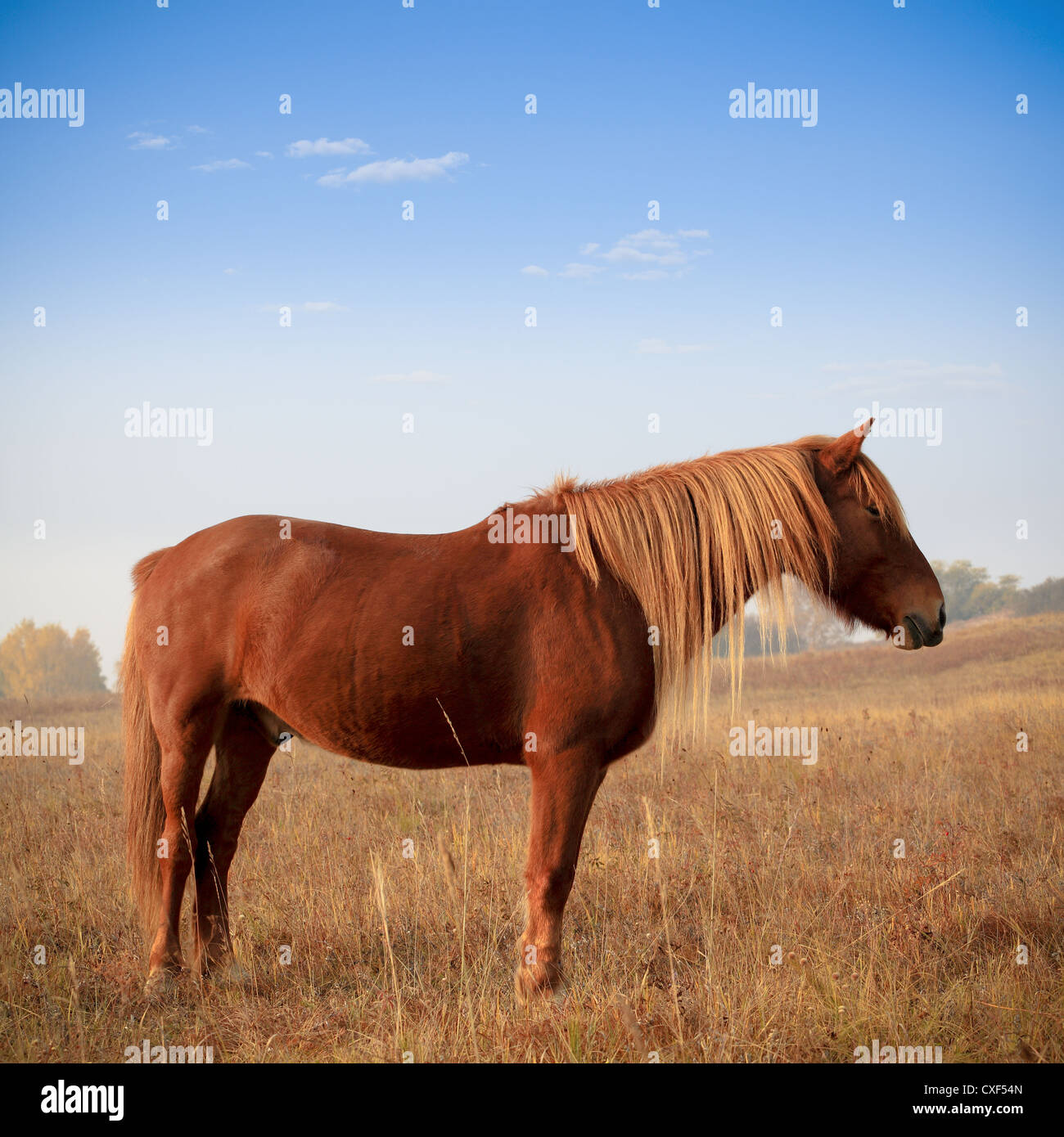 Brown Horse High Resolution Stock Photography And Images Alamy