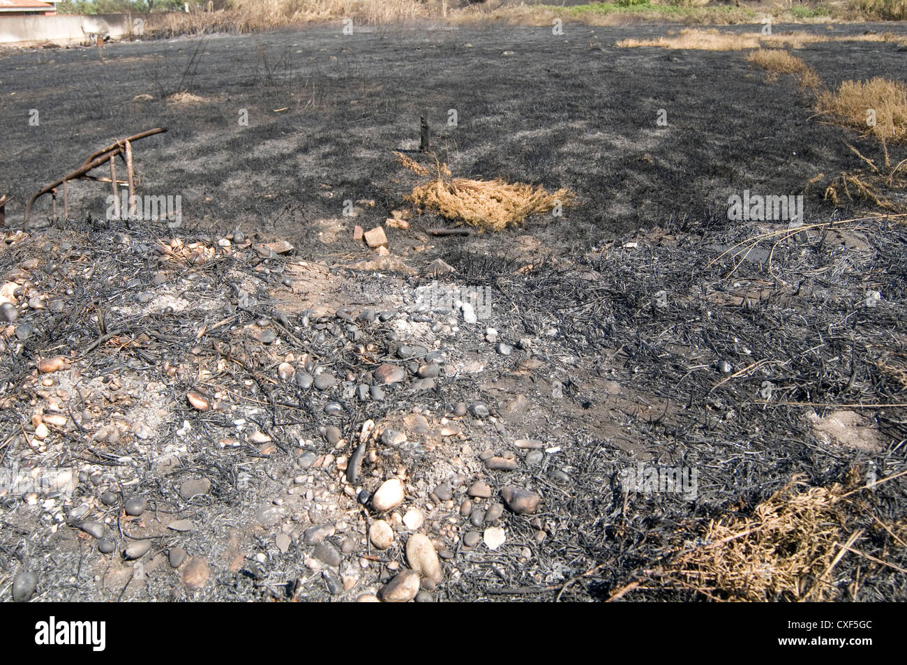 scorched earth soil ground forest fire fires ash burnt - Stock Image