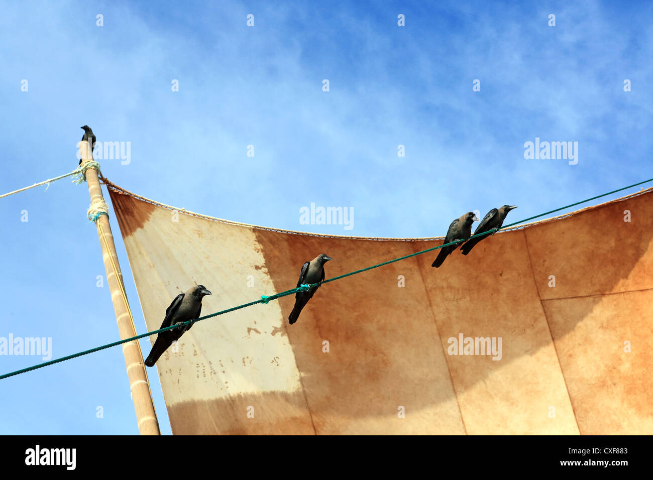 Crows perched on the sail of catamaran fishing boat waiting for scraps on Negombo beach, Sri Lanka. - Stock Image