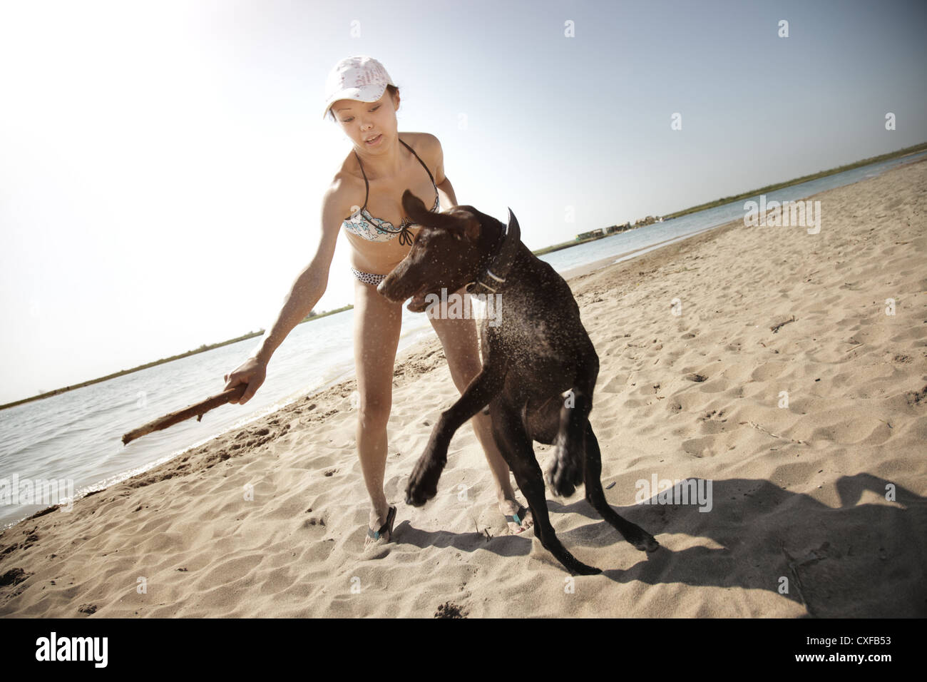 Woman in vacation playing with her dog at the summer beach. Artistic colors added - Stock Image