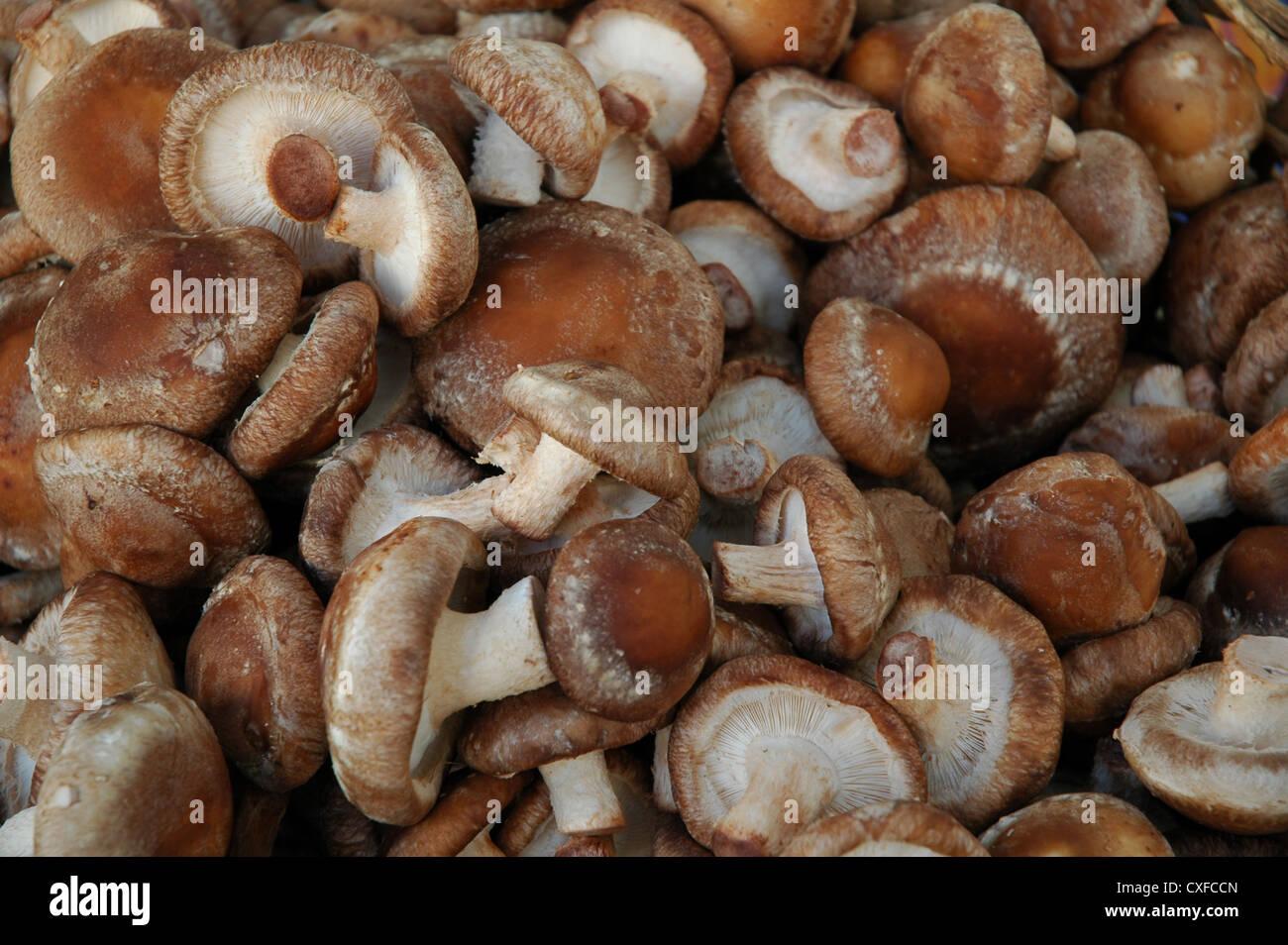 MushroomsStock Photo