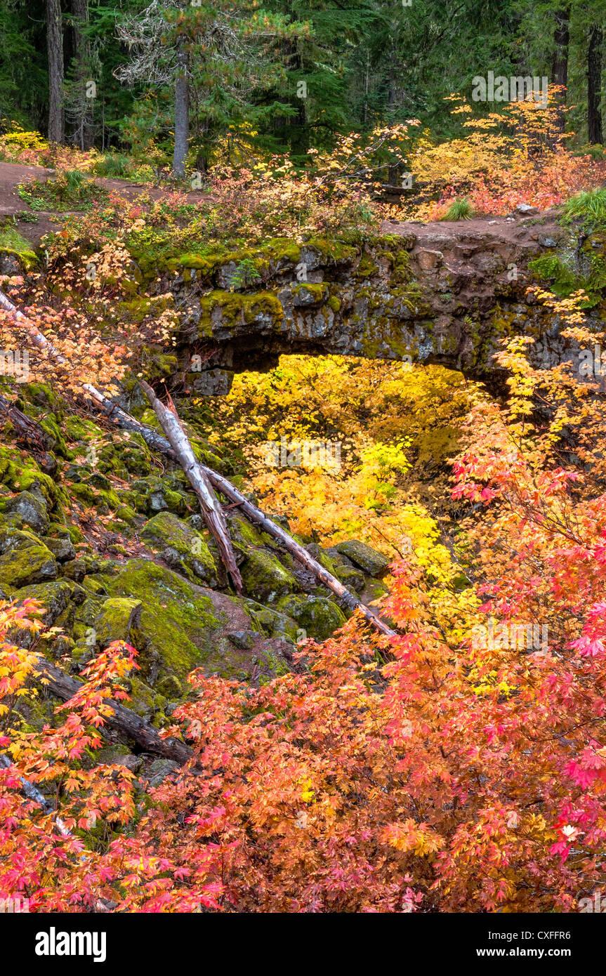 Natural Bridge Interpretive Site, Gifford Pinchot National Forest, Washington. - Stock Image