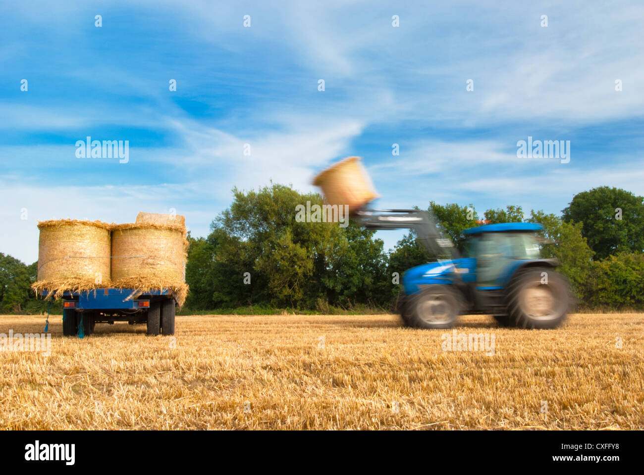Make hay while the sun shines. A tractor works fast to collect the hay bales. - Stock Image