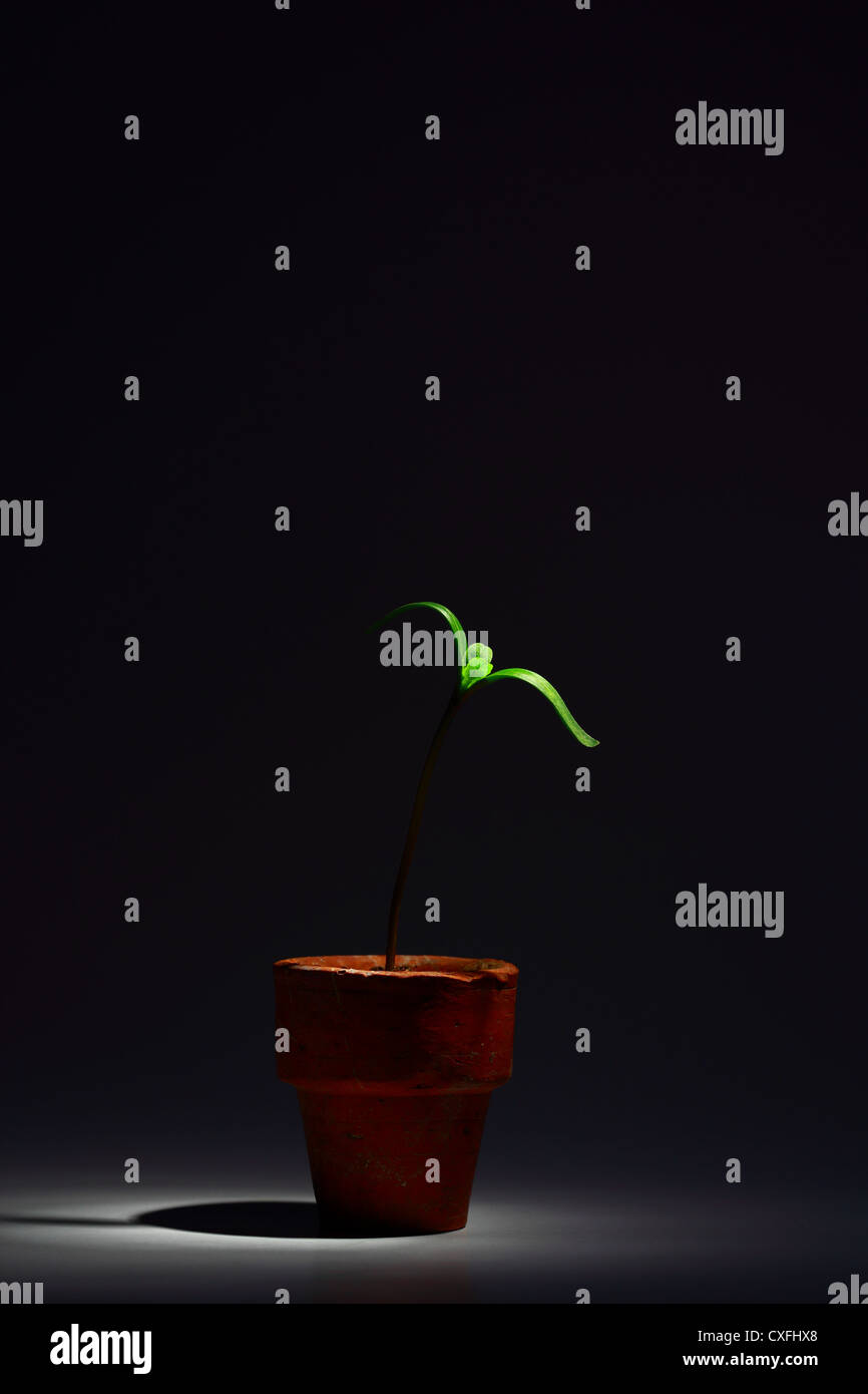 Sprout in the darkness - Stock Image