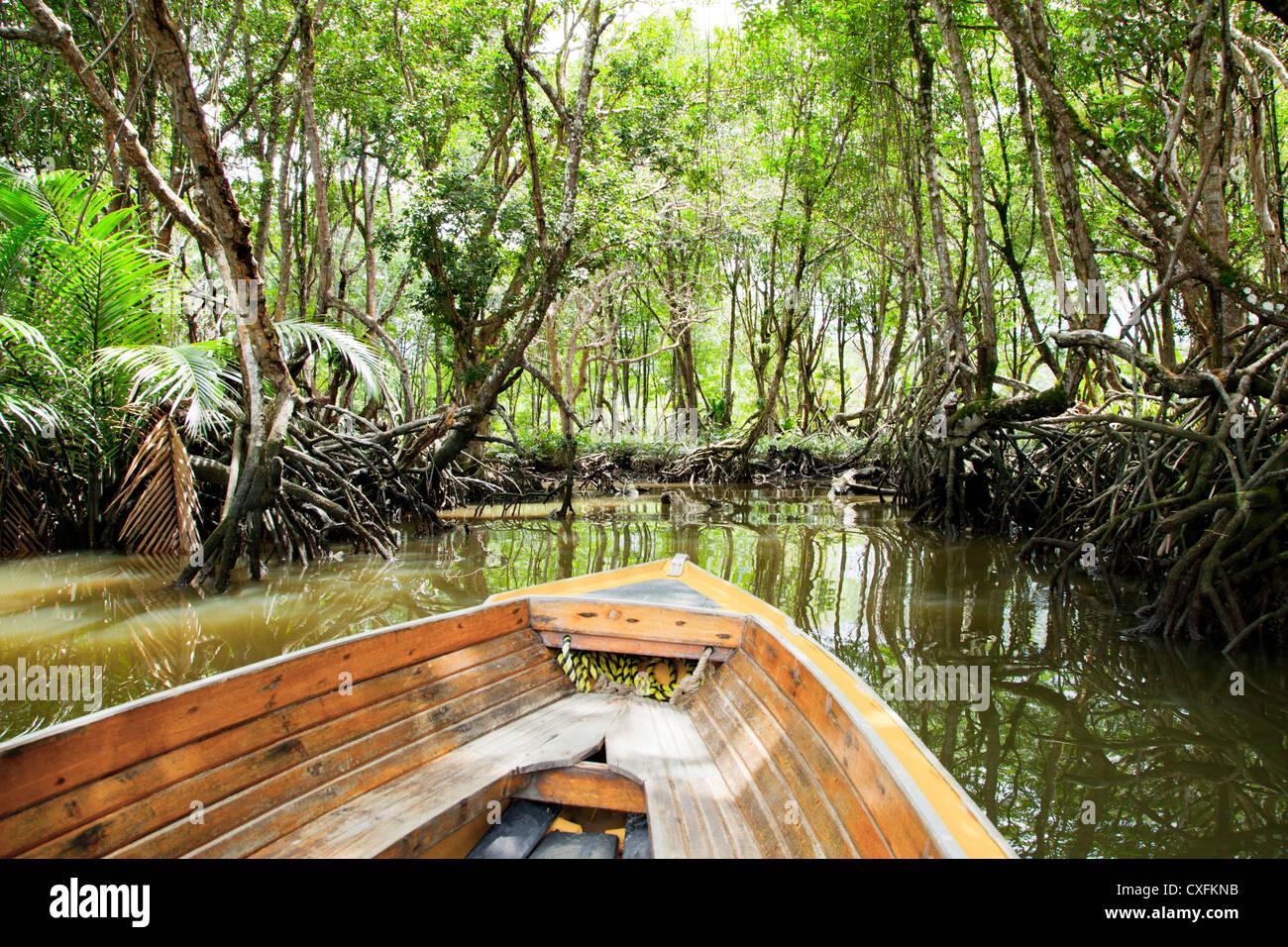 Mangrove forest near Bandar Seri Begawan, Brunei - Stock Image