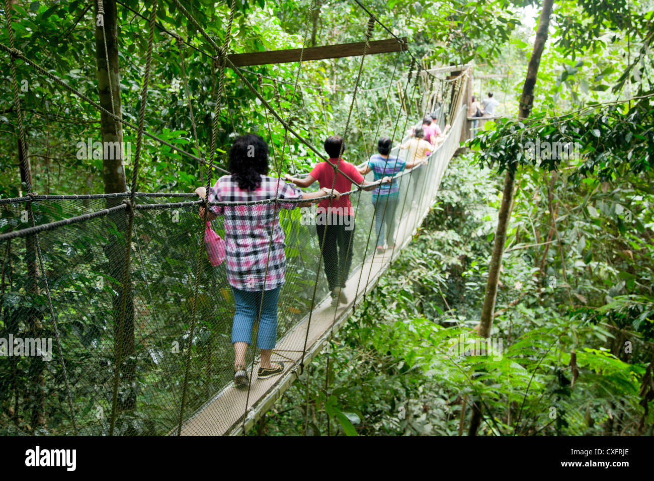 Canopy Walk in Mt. Kinabalu National Park Stock Photo