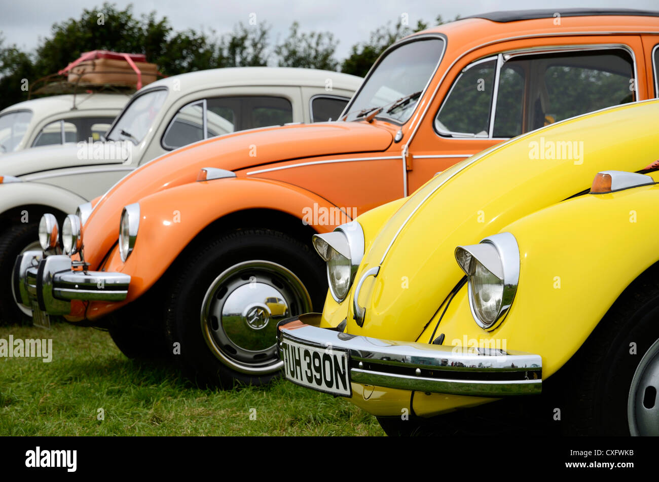 Volkswagen Beetles at a VW rally, UK - Stock Image